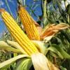 BDI – BioEnergy: Bau von größter Multi-Feedstock BioDiesel-Anlage Frankreichs